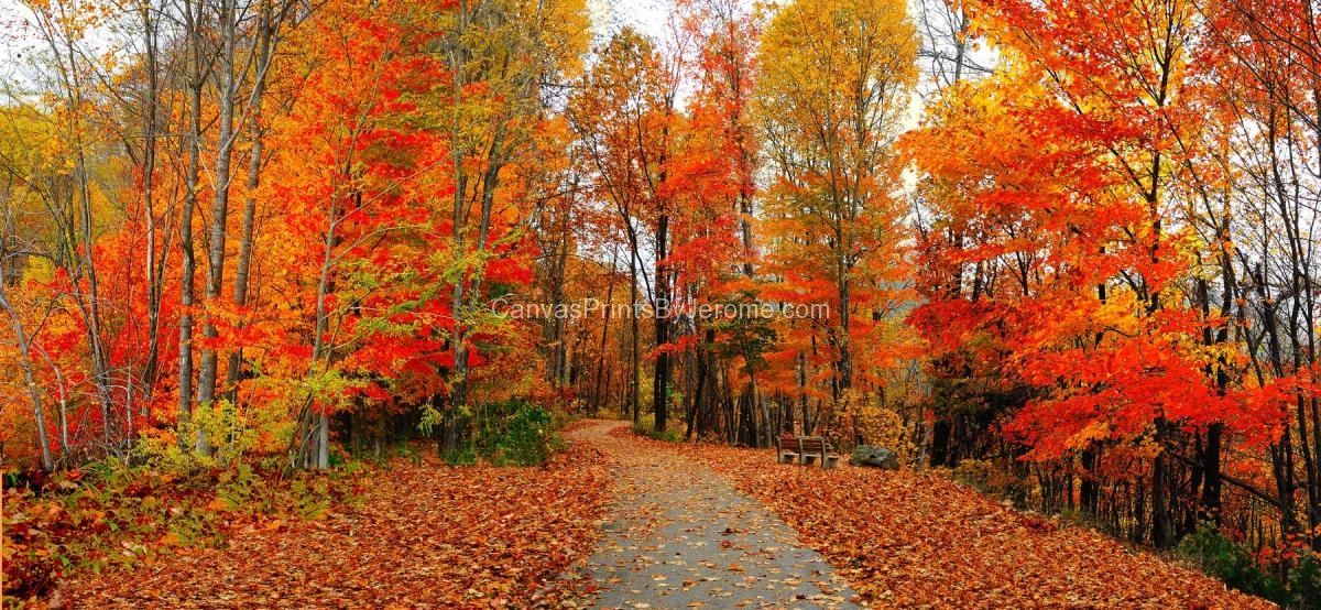 Fall Color - Canvas Prints By Jerome