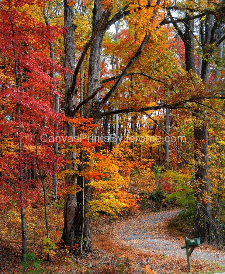 Fall Color Canvas Prints By Jerome